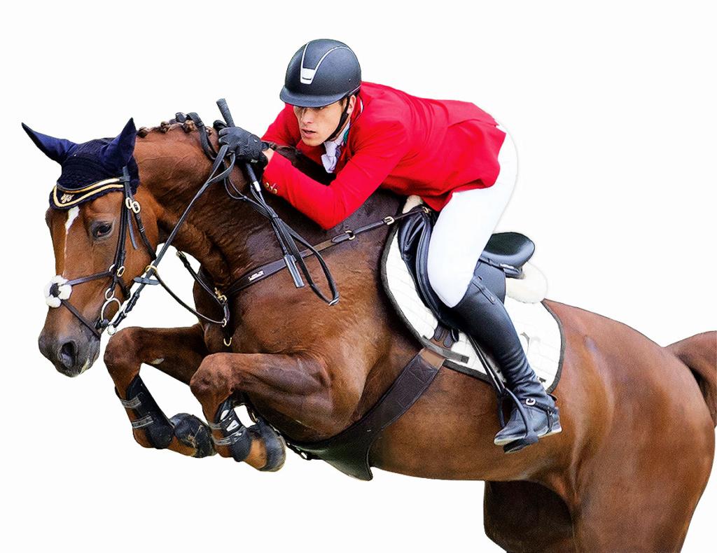 Detourage d un cheval Cheval10