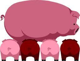 A proposito di maiali - Pagina 2 Pig_1510