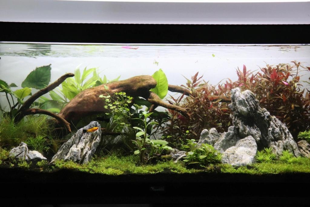 Lancement aquarium amazonien 140L 12013310
