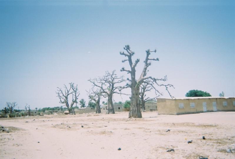 Photos de voyages Baobab11