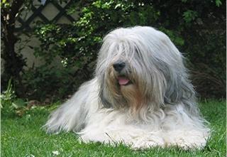 quand les gens confonde vos chiens avec une autre race!!! - Page 2 2007-010