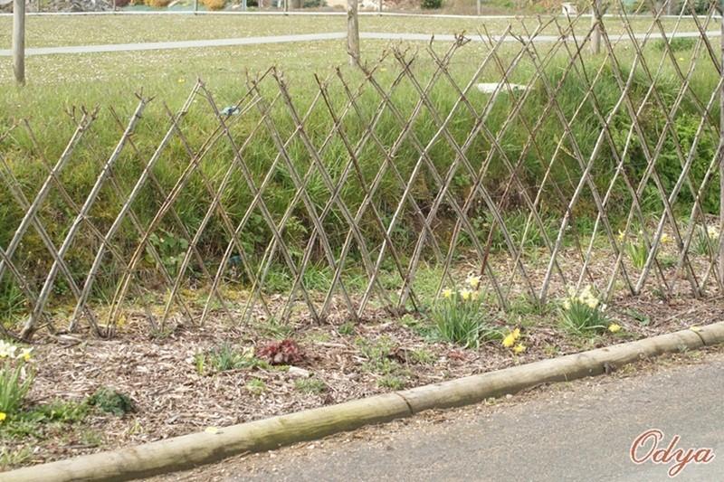 L'osier au jardin : plessis - haie végétale - cabane - tipi 2013_a65