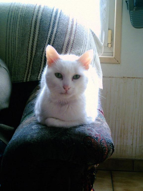 mes chats disparu 222210