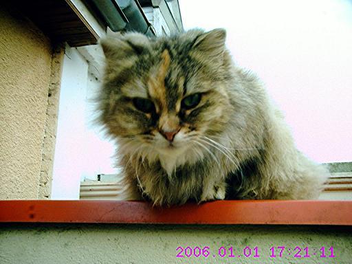 mes chats disparu 5510