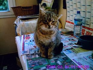 mes chats disparu Crim0010