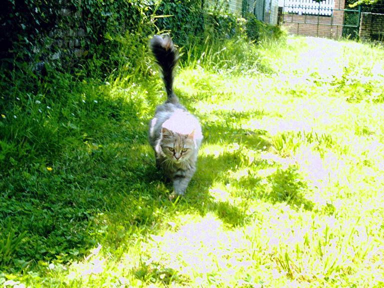 mes chats disparu Crim0011