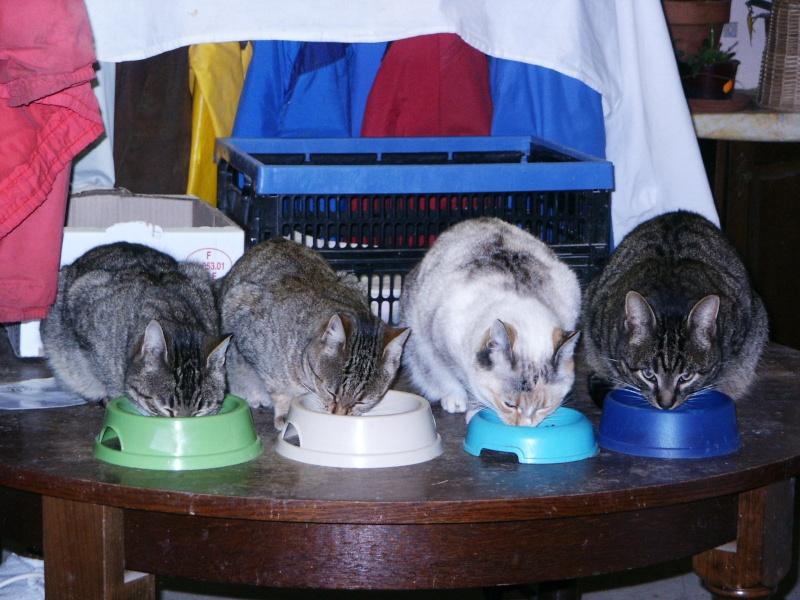 Les chats, les chiens, et autres chouchoux.... - Page 9 06012010