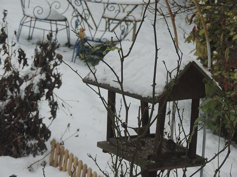 aidez les oiseaux à se nourrir 1er_ja10