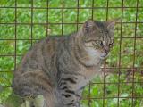 Les chats parrainés Bagher12