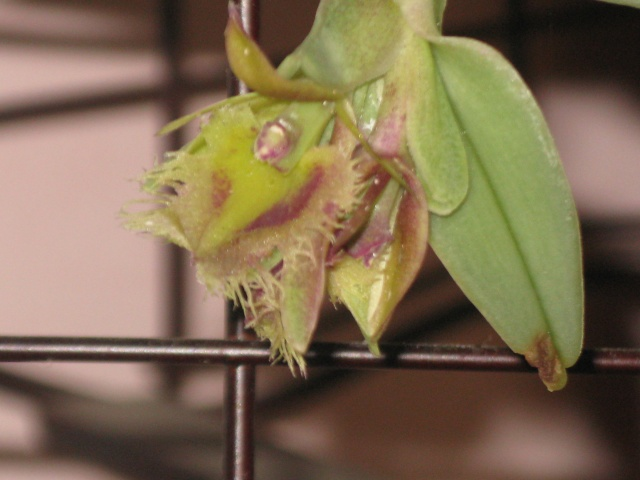 mes orchidées Epi_me10