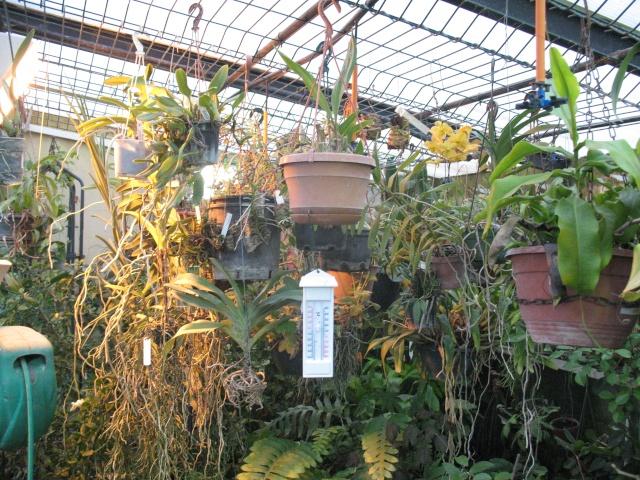 mes orchidées Img_3010