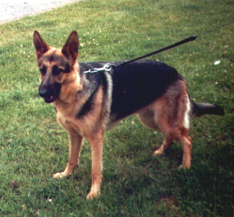 Unsere Tierchens Gina0110