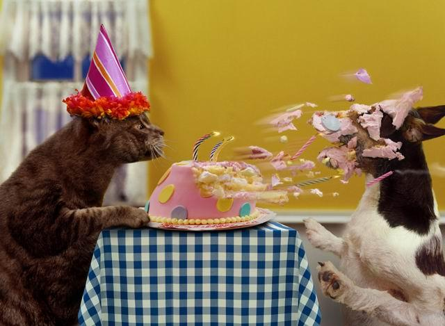 Happy Birthday Aqualis Gato0110