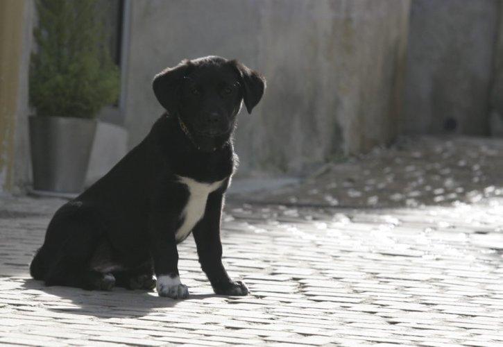 Créer une association de protection des animaux 20090310