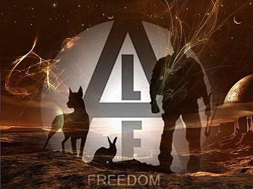 Libération de 3 cochons ( Animal Libération Front ) Alf10