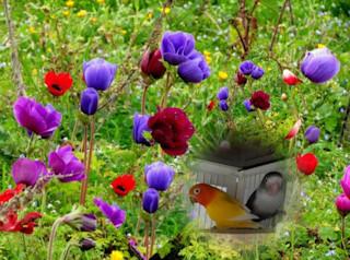 Le Chant des Plumes - Portail Pixiz817
