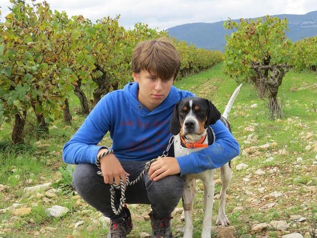 ORSON,  dit Noxx  mâle  braque tricolore 16 mois d' asso SOS Décharge, Corse   - Refuge Sans Collier Provence à Gareoult (83) - Deutschland Nox-ca10