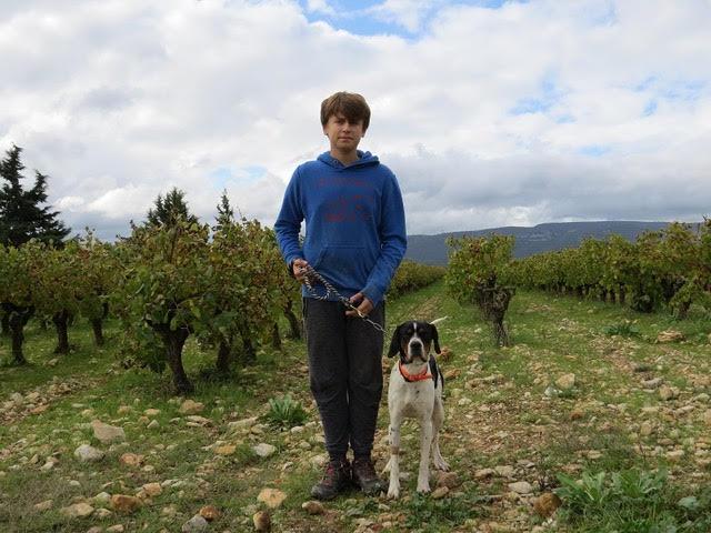 ORSON,  dit Noxx  mâle  braque tricolore 16 mois d' asso SOS Décharge, Corse   - Refuge Sans Collier Provence à Gareoult (83) - Deutschland Nox-ga10