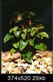 Reception et préparation des plantes forme émergée Ammani10