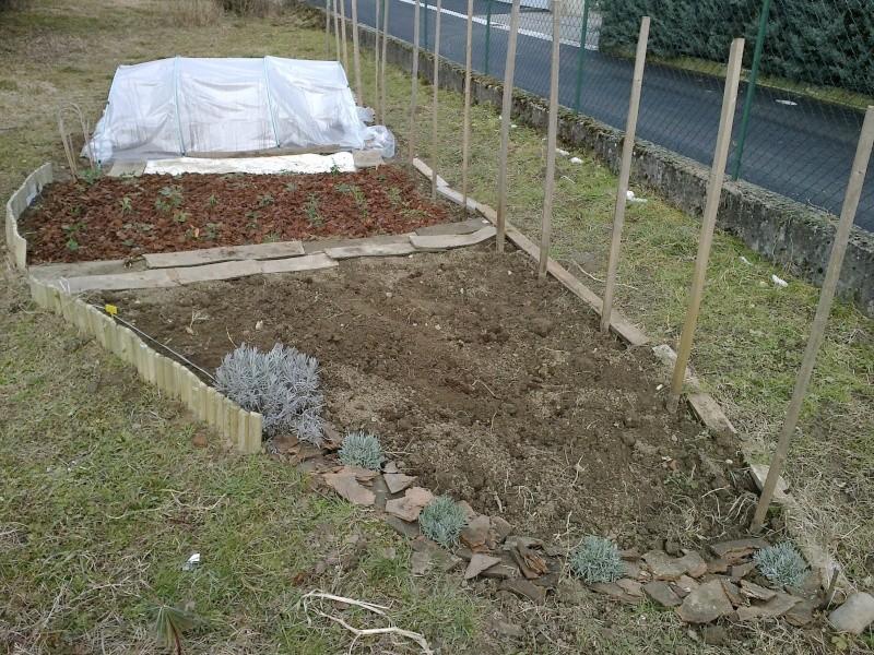 La première vraie récolte de notre premier jardin ! - Page 2 Jardin10