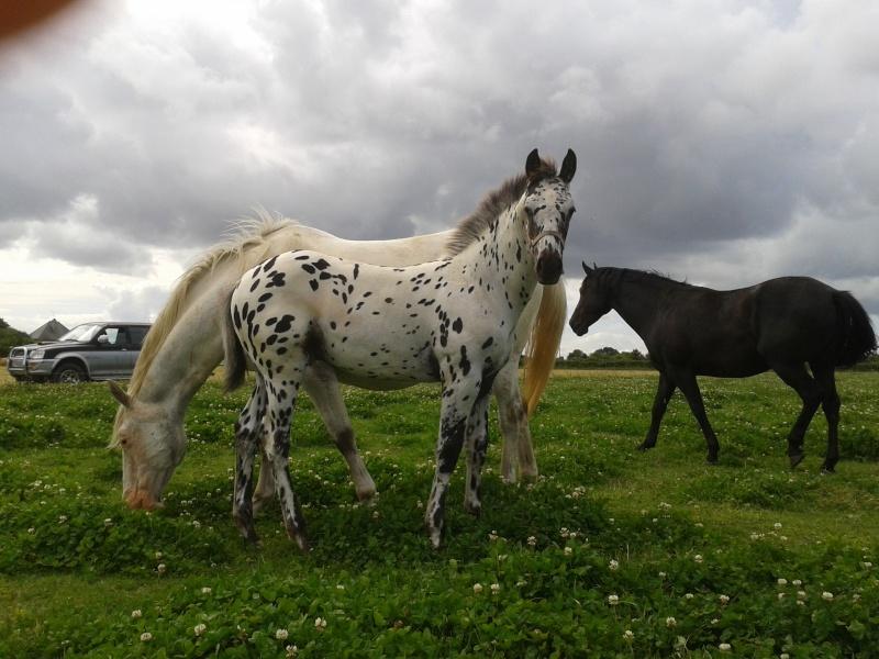 Ranch du Vignet > FIN ! 2012-010