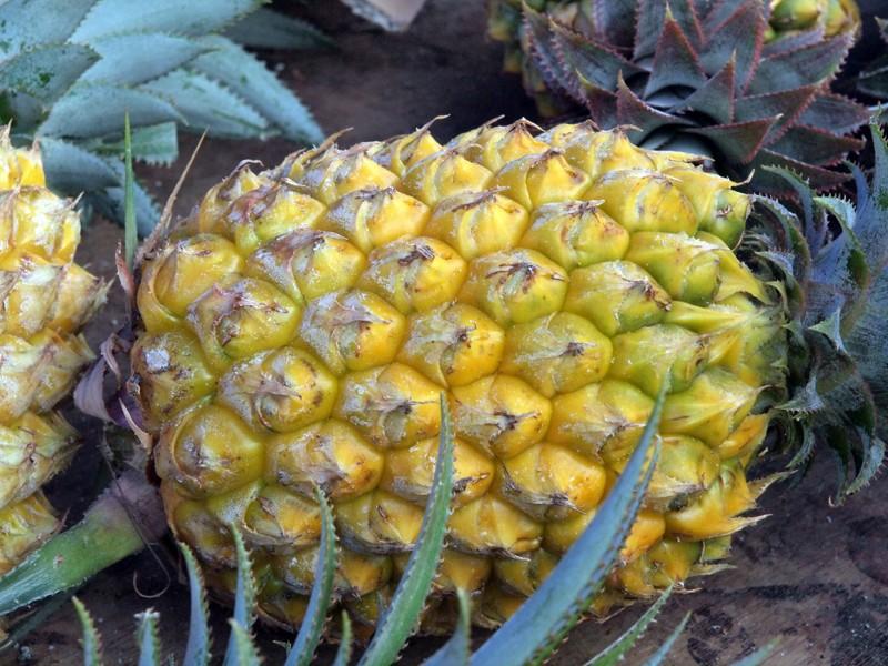 Fruits et Légumes sur les marchés de l'ile de la Reunion Ananas10