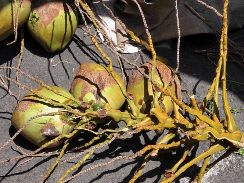 Fruits et Légumes sur les marchés de l'ile de la Reunion Noix_c10
