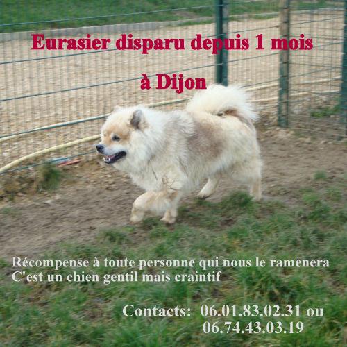 Farouk type Eurasier perdu Dijon!!! 10881_10