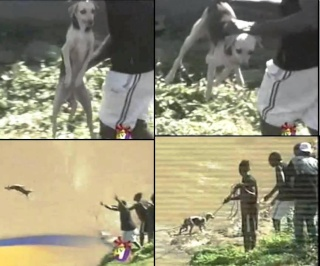 Jamaïque: des chiens sont jetés vivants aux crocodiles 54594111