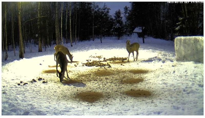 Boars cam, winter 2012 - 2013 - Page 18 2013-057