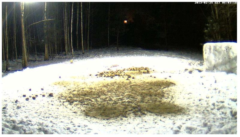 Boars cam, winter 2012 - 2013 - Page 18 2013-071