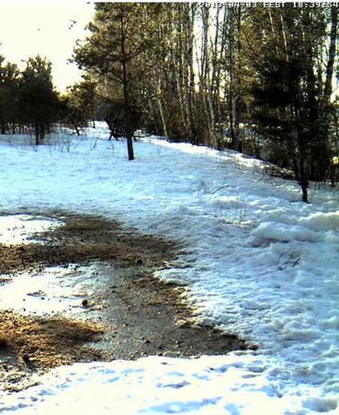Boars cam, winter 2012 - 2013 - Page 31 2013-187
