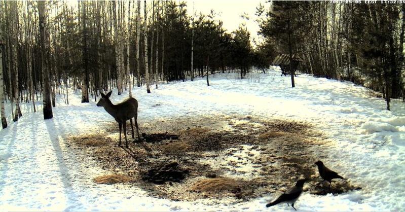 Boars cam, winter 2012 - 2013 - Page 31 2013-193