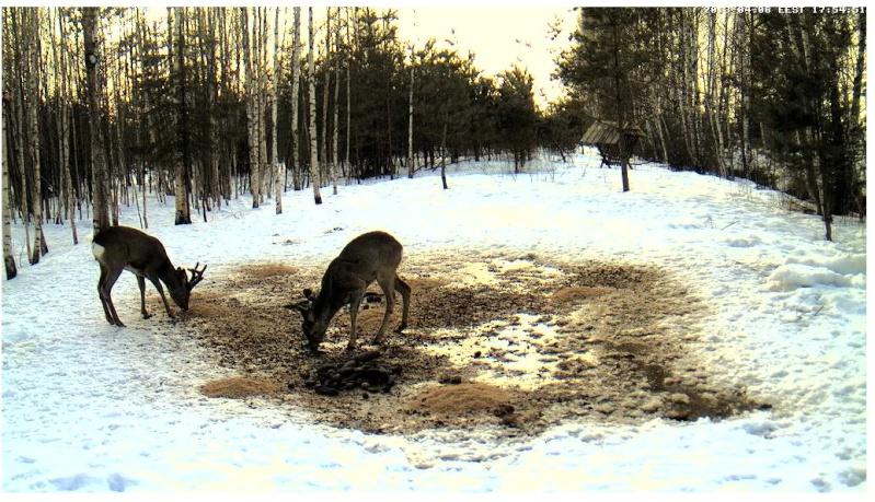 Boars cam, winter 2012 - 2013 - Page 31 2013-194