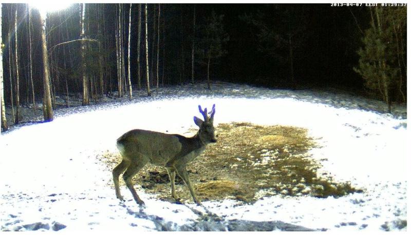 Boars cam, winter 2012 - 2013 - Page 32 2013-198