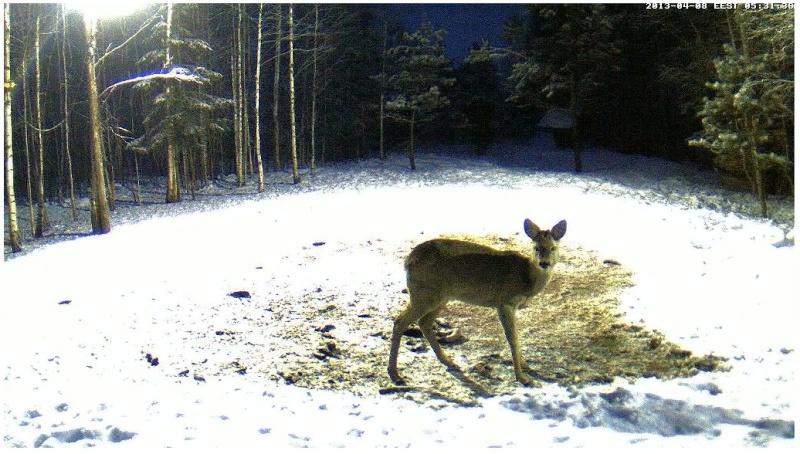 Boars cam, winter 2012 - 2013 - Page 32 2013-207