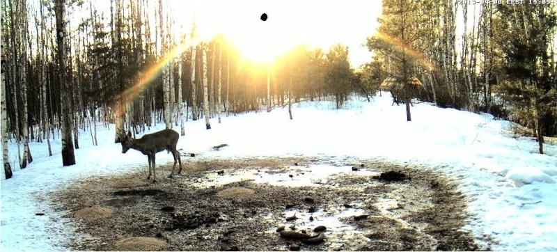 Boars cam, winter 2012 - 2013 - Page 32 2013-210