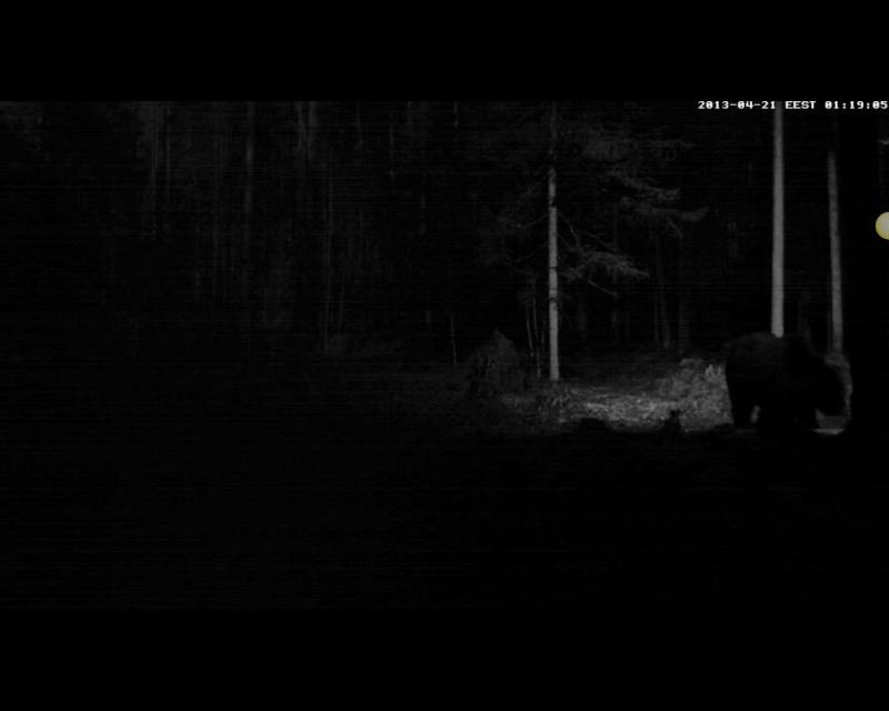 Alataguse Bear Cam 2013 - Page 2 2013-239