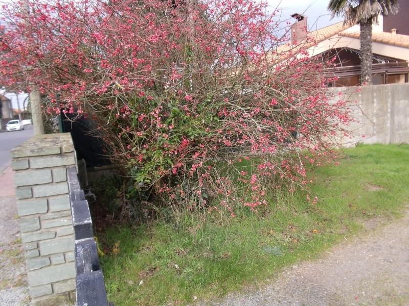 Les arbustes de printemps Dscf1018