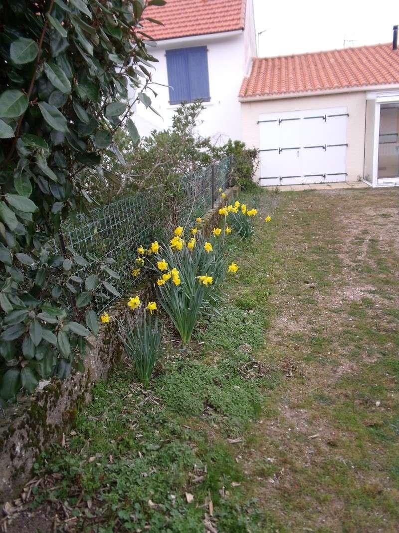 Les arbustes de printemps Dscf1019