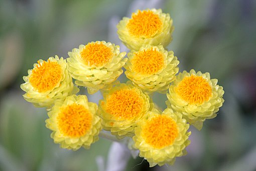 identification fleur jaune 59875910