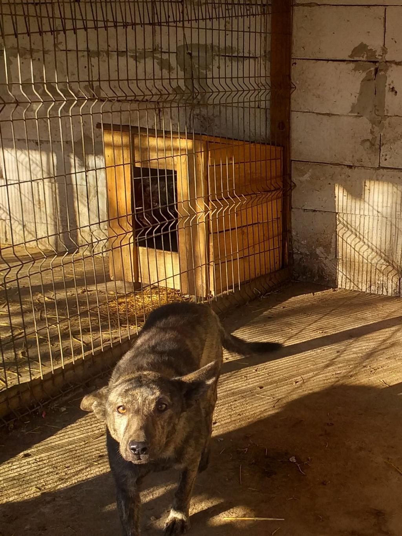 ARRY, mâle né en 2013, récupéré suite à l'avis d'expulsion du refuge de Radu- marrainé par Bouffy-R-SC-SOS 20810