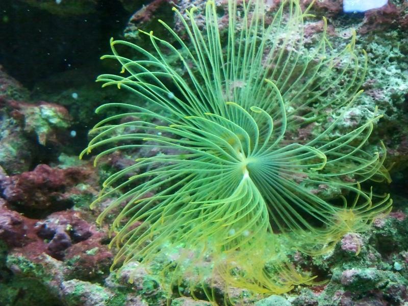 fabrication meuble aquarium siporex  2011-014