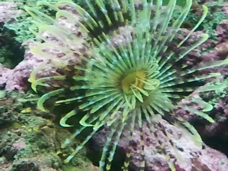 fabrication meuble aquarium siporex  2011-015