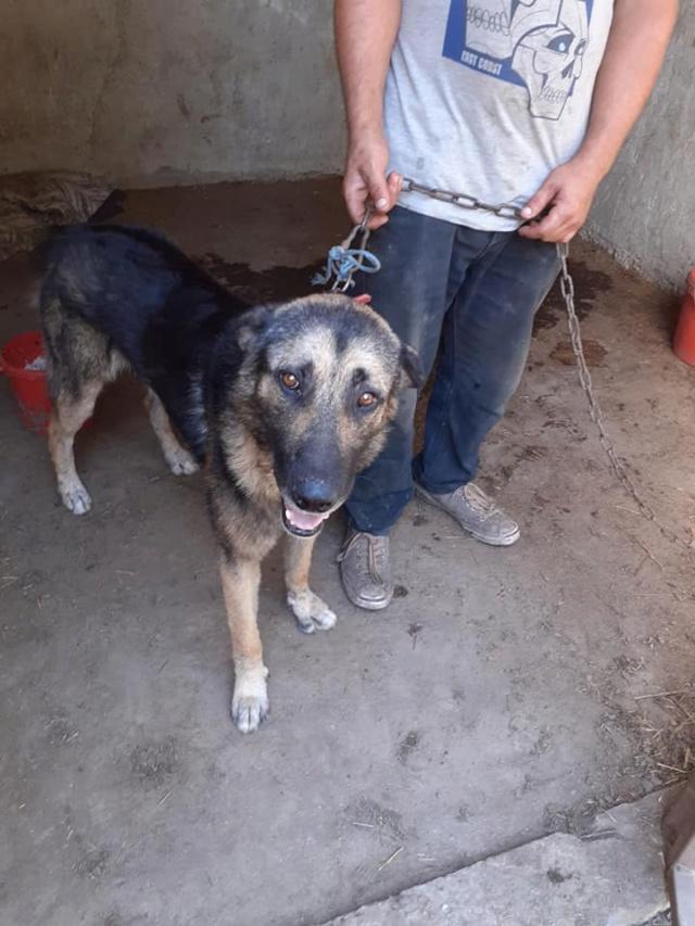 aden - ADEN, né en 2015 ,  trouvé attaché à la grille du refuge-R-SC-SOS 11895610