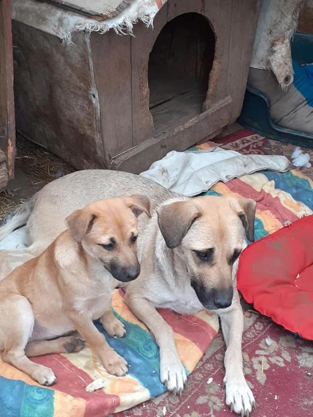 Manisha - MANISHA née en 2018 - maman et ses 3 chiots sauvés de Mihailesti le 20/08/2020 - parrrainée par Coco65-R-SC-SOS 12434310
