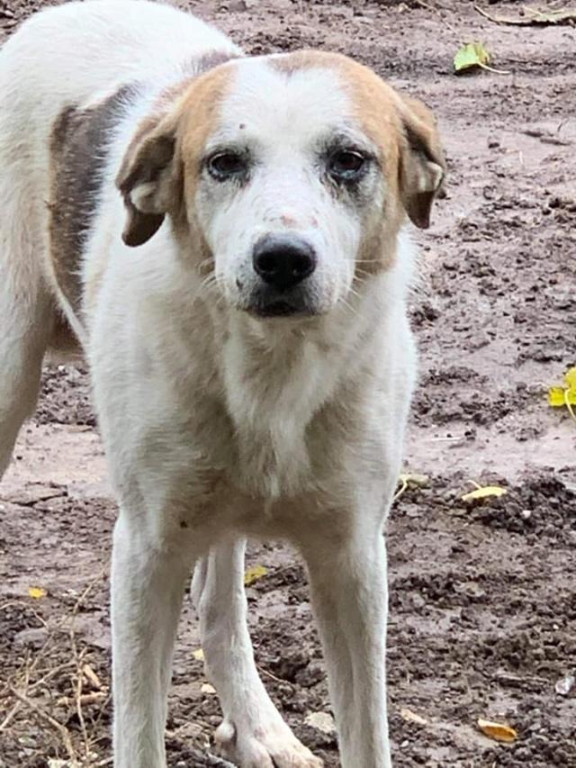 NEISSON, mâle taille moyenne, né en 2010 , trouvé près de Bucarest - parrainé par Sylvie H-R-SC-SOS 12435511