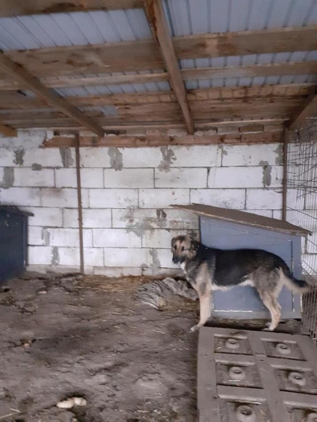 aden - ADEN, né en 2015 ,  trouvé attaché à la grille du refuge-parrainé par Marine M. - R-SC-SOS 12955310