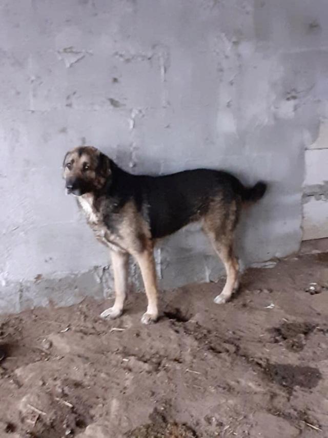 aden - ADEN, né en 2015 ,  trouvé attaché à la grille du refuge-parrainé par Marine M. - R-SC-SOS 13029810