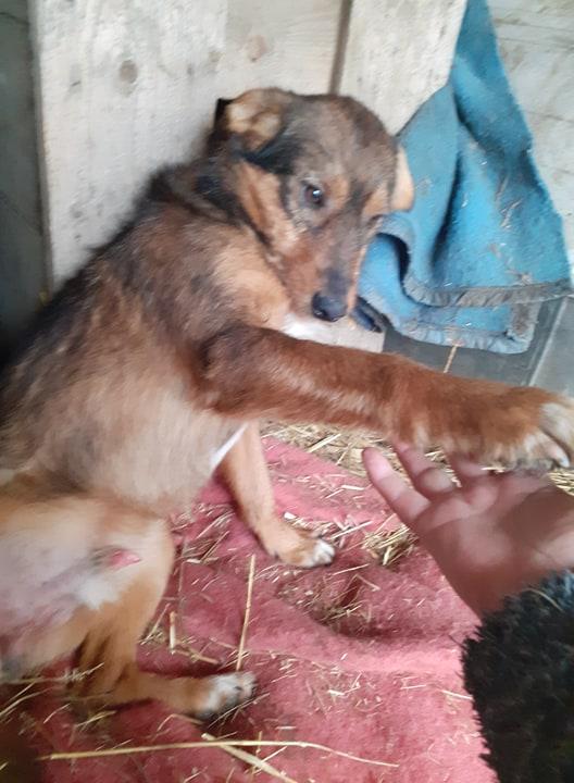 snooki - SNOOKI - mâle - né en 2019, trouvé errant dans le champs en face du refuge en Décembre 2020-R-sSOS-SC 13694710